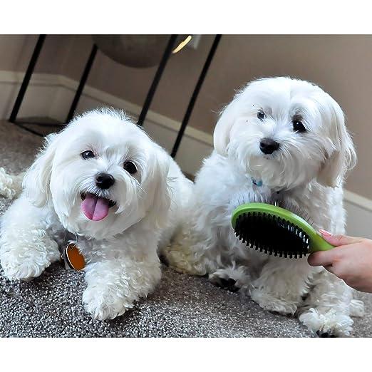 Safari - Cepillo de cerdas para Perros con Mango de Madera ...