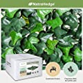 """NatraHedge Artificial Ivy Leaf 20""""x 20"""" Square Panels Privacy Screen Decorative Hedge Mat (12 Pack - 33 SQF)"""