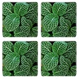 MSD Square Coasters Non-Slip Natural Rubber Desk Coasters design 32509186 Dark Green Leaves of Fittonia Acanthaceae also called Nerve or mosaic plant