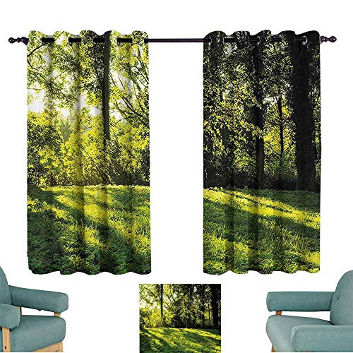 DILITECK Windshield Curtain Green Forest Landscape at Sunrise Beams Trees Grass Field Rural Scenery Nature Peaceful Photo Thermal Insulated Tie Up Curtain W63 xL72 Green