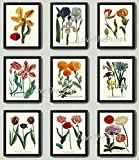 Beautiful set of 9 prints based on antique botanical illustrations from 1862. Wonderful details, colors and natural history feel. • The prints measure 4x6, 5x7, or 8 x 10 inch. based on your selection come with a white border for easy framing...