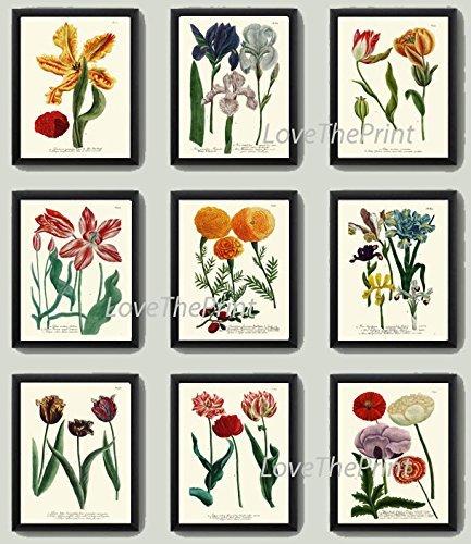 (Botanical Print Set of 9 Antique Beautiful W Blue Yellow Pink Iris Red Tulip Marigold Peony Garden Nature Plant Flowers Home Room Decor Wall Art Unframed)