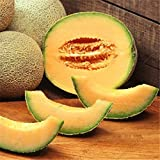 Solution Seeds Farm Rare Honeydew Sweet Melon Seeds, 20 Seeds, greenish light yellow inside cobwebbing Skin