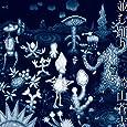 並む踊り(DVD付)(デカジャケット付)