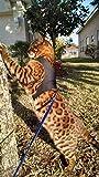 Mynwood Cat Jacket/Harness Black Adult Cat