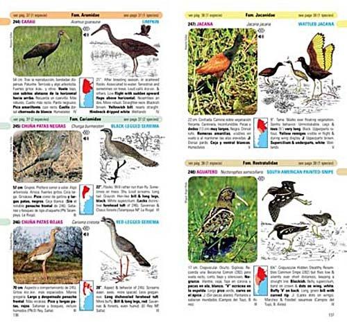 Birds of Argentina Photos Birds of Argentina Uruguay