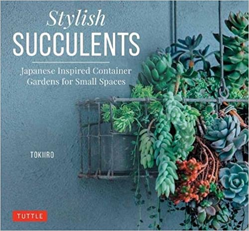 Japanese Inspired Container Gardens for Small Spaces Stylish Succulents