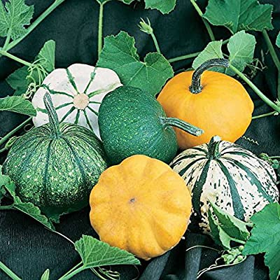 Park Seed Park's Pattypan Hybrid Blend Squash Seeds