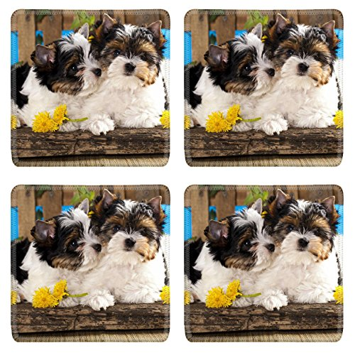 (Luxlady Natural Rubber Square Coasters IMAGE ID: 20325096 Beaver Yorkshire Terrier and dandelions flowers)