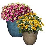 Classic Home and Garden Patio Pot Honeysuckle