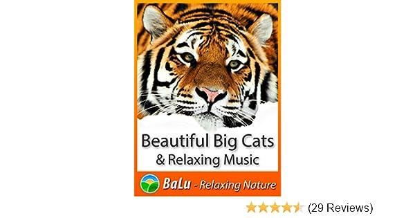 images-na ssl-images-amazon com/images/I/61SSCxxqs