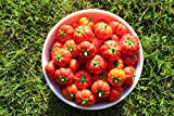buy New Mini Pumpkin Tree. 60+ Fresh Organic Seeds now, new 2018-2017 bestseller, review and Photo, best price $4.14