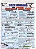 Fishermans Bait Rigging Chart #1