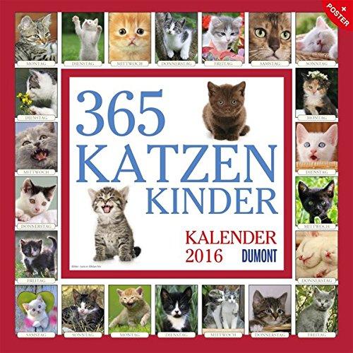 365 Katzenkinder 2016