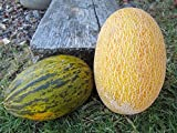 buy Anne Arundel, Persian & Hami Melons 20 Seeds Take Your Choice - All Hard to Find now, new 2018-2017 bestseller, review and Photo, best price $5.68