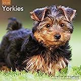 Yorkies Wall Calendar (2018)