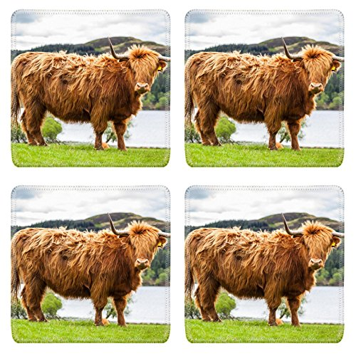 - Luxlady Natural Rubber Square Coasters IMAGE ID: 34434742 King of the Meadow Incredible Scottish Cattle