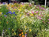Dry Area Wildflower Mix Seed Packet to 10LB Arid Land Xeriscape Easy ST1 (600k seeds, or 2 LB)