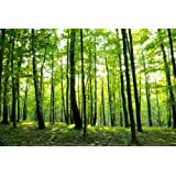 """13.5-Feet wide by 9-Feet high.Prepasted wallpaper high quality full wall size mural from a photo of: Sunny Forest Trees.Easy to hang remove and reuse(hang again)If U do as in our video.162""""W by 108""""H"""