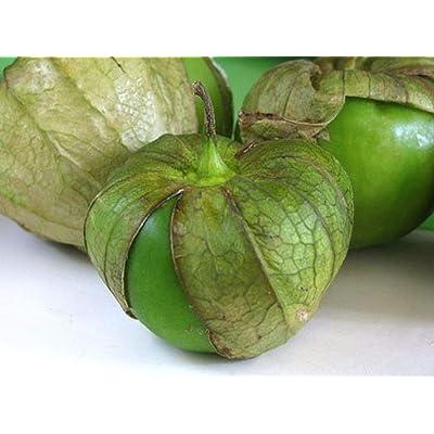 Tomatillo Verde Seeds (20 Seed Pack) : Garden & Outdoor