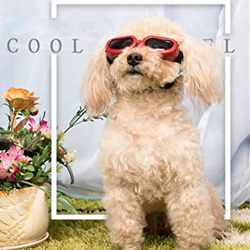 QNMM Gafas de Sol adorables para Perros Gafas de Sol para ...