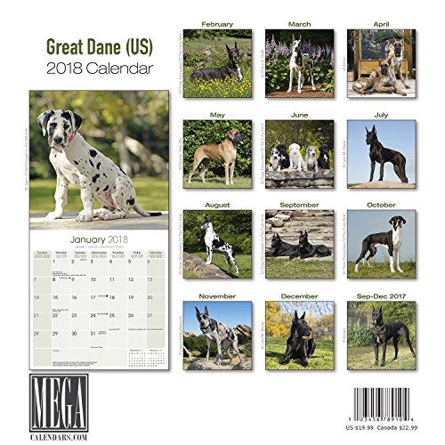 Great Dane Calendar 2018 - Dog Breed Calendar - Premium Wall Calendar 2017-2018 Photo #3