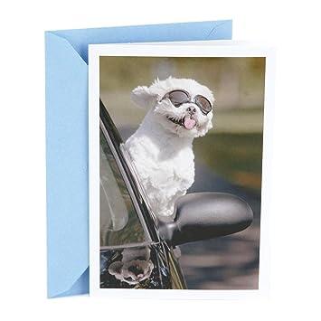 Amazon Hallmark Shoebox Funny Birthday Card Dog In Car Office Products
