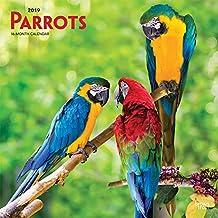 Parrots 2019 Square Wall Calendar