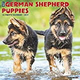 Just German Shepherd Puppies 2019 Wall Calendar (Dog Breed Calendar)