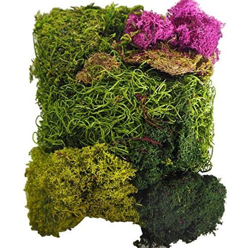 Chic Moss Fairy Garden And Succulent Terrarium Accent Pack