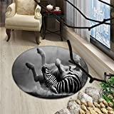 Africa Round Area Rug Zebra Rolling in the Dust Artistic Savage Animal Mammal Activity Eco PhotoOriental Floor and Carpets Black and White