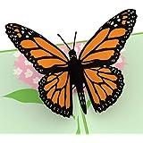 Lovepop Butterfly Pop Up Card, 3D Card, Birthday Card, Summer Card, Spring Card
