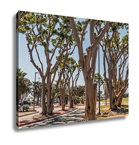 Ashley Canvas, Coral Trees Lining A Street At Embarcadero Park South In San Diego California, Wall Art Home Decor, Ready to Hang, 16x20, - Coral Promenade The Springs