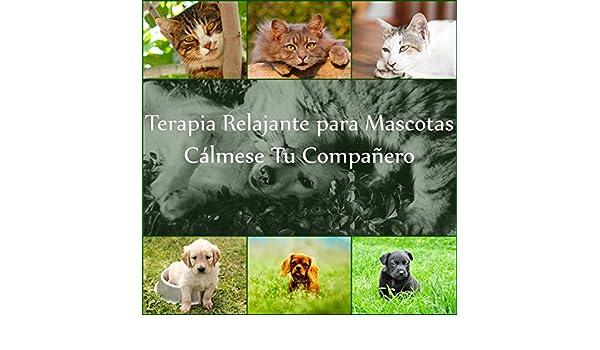 Terapia Relajante para Mascotas: Cálmese Tu Compañero, Música de Piano Suave con Sonidos de la Naturaleza, Terapia de Música para Perros y Gatos, ...
