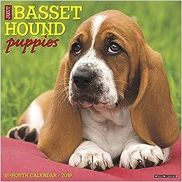 Just Basset Hound Puppies 2019 Wall Calendar Dog Breed Calendar