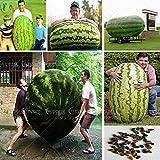 30 / bolsa de semillas de sandía gigante, verduras sabor dulce y semillas de frutas gigantes muy delicioso