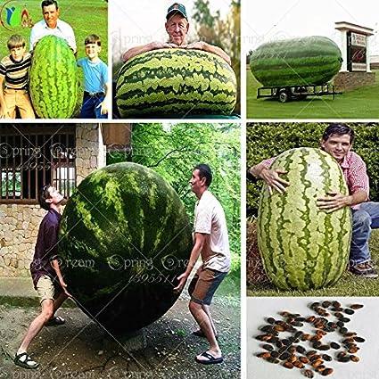 30PCS gigante sand/ía Semillas de hortalizas sabor dulce y frutos de plantar las semillas de la sand/ía no GMO frutos comestibles