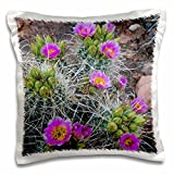 3dRose Danita Delimont - Cactus - Usa, Utah, Arches NP. Whipples Fishhook Cactus blooming and with buds. - 16x16 inch Pillow Case (pc_260304_1)