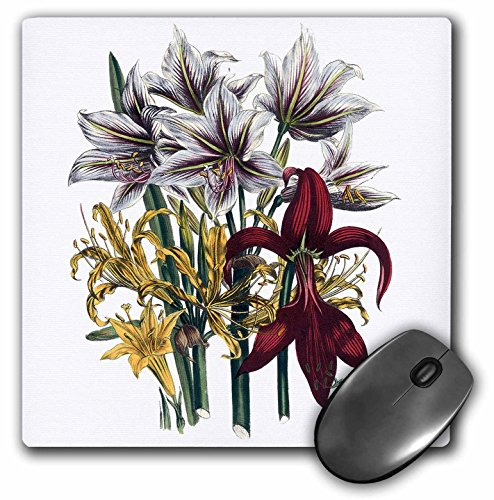 3dRose BLN Vintage Flower Collection - Amaryllis, Lycoris, Sprekelia, Pyrolirion with yellow, White and Red Flowers - MousePad (mp_153173_1)
