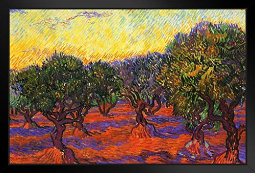 (Vincent Van Gogh Olive Grove with Orange Sky Art Print Framed Poster 20x14 inch )