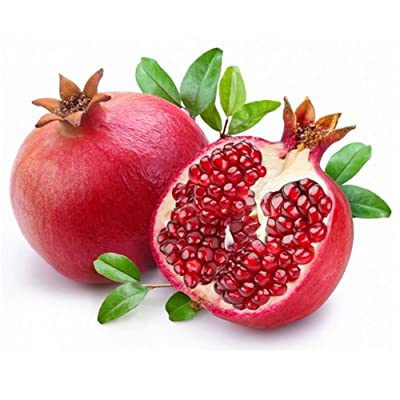 XKSIKjian's Garden 15Pcs Pomegranate Seeds Organic Fruit Seeds Ornamental Plant Home Yard Office Decor Non-GMO Seeds Open Pollinated Seeds for Planting : Garden & Outdoor