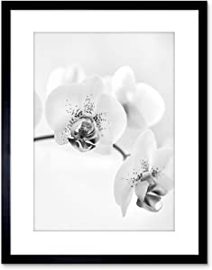 The Art Stop Photo Nature Plant Orchid Flower Black White Framed Print F97X4368