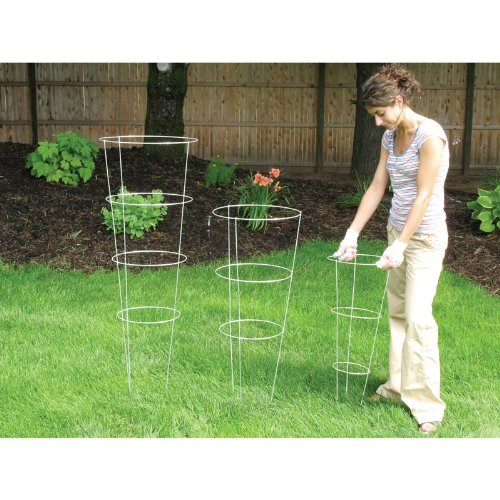 tomato cages 33 - 4