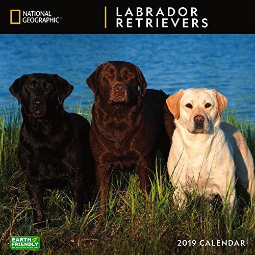 (National Geographic Labrador Retrievers 2019 Wall Calendar)