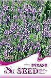 Verbena Hastata Blue Vervain Perennial Flower Seeds, Original Pack, 30 Seeds / Pack, Swamp Verbena Flowering Plant A224