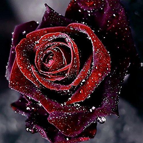 rose musk air freshener - 2