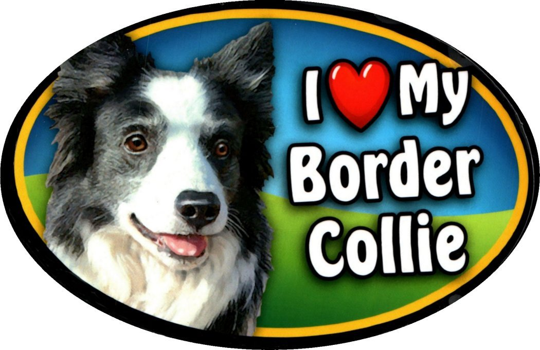 """my Border Collie Heart 6/"""" x 4/"""" Oval Dog Magnet for Cars and Fridges I"""