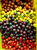 50 Seeds Cherry Tomato Seed (Allsort Mix) Beyond the Basic Red Cherry Tomato- Organic