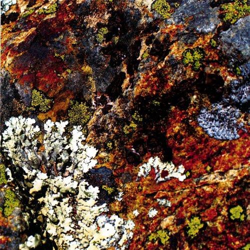 Lichens - Lichen Garden