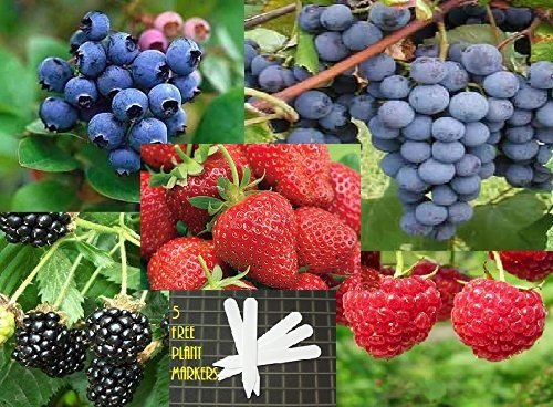 fruit and berry plants - 9